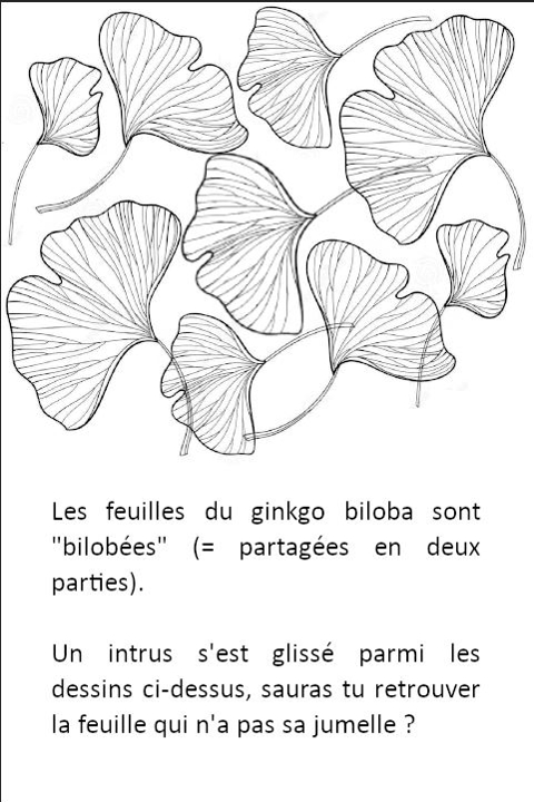 gingko jeu question